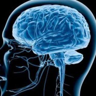 İnsan Beyninin Yapısı #1