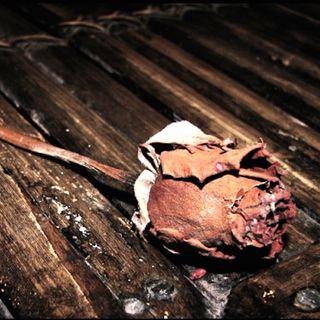 Dino Buzzati: Una lettera d'amore