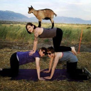 Paige from Utah Goga Guys well Share  Goat Yoga !