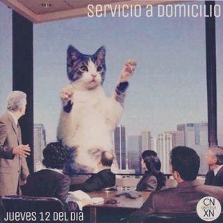 Servicio a domicilio 23