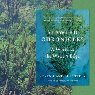 Susan Hand Shetterly Releases Seaweed Chronicles
