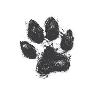Oil of Oregano for Dogs