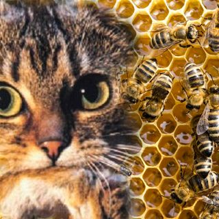 Nientedimeno TML - 4.08 - Nientediquark - Honey bees & bad cats