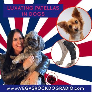 What Can You Do When Your Dog Has A Luxating Patella?