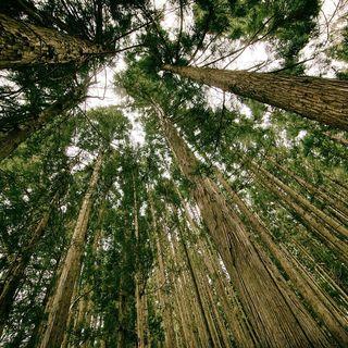 #21 Dovremmo smetterla di piantare alberi a caso