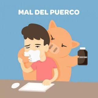 """¿Qué música escuchas para librarte del """"MAL DEL PUERCO""""?"""