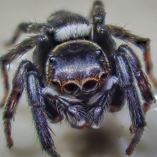 How To Meet Tarantulas?