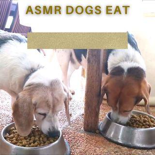 1 Hour of ASMR: Dogs Eat Crunchy Food 🐶