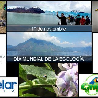 NUESTRO OXÍGENO 1° de noviembre Día mundial de la ecología Ing Gladys Cardona