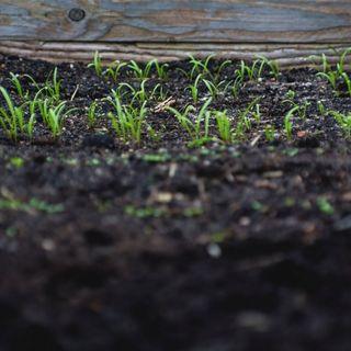 Dalla FAO la definizione ufficiale di suolo sano