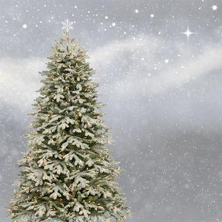 #30 A Natale albero finto o abete vero? [Ospite la youtuber Tatiki]