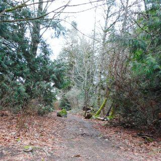 The Amblewood Loop