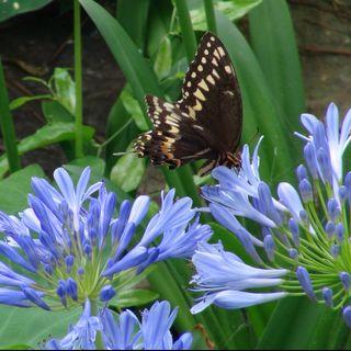 Big Blend Radio: Hodges Gardens State Park in Louisiana