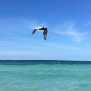 Responsabilidad, respeto y disciplina para llegar a un baño de playa