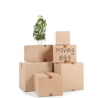 Episode 40 - Moving with Houseplants