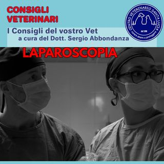 22 Laparoscopia in veterinaria, 7 motivi per scegliere una grande innovazione in chirurgia veterinaria