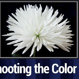 TTG Clip: Shooting With the Color White