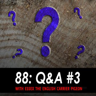 88 - Q & A 3 w/ Essex the English Carrier Pigeon