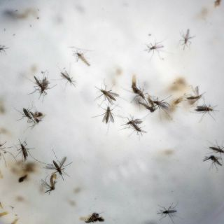 Congress Playing Politics with Vital Zika Virus Funding