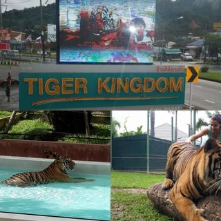 My Trip to Thaïland! (Roar)