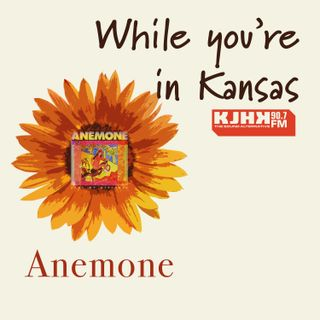 While you're in Kansas: Anemone