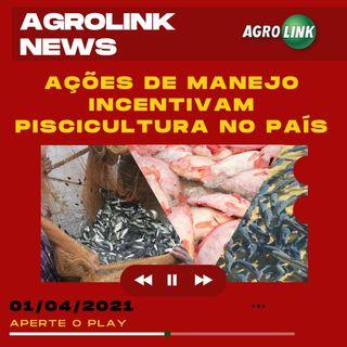 O consumo e a produção de peixes no Brasil, o início da colheita de pinhão de Santa Catarina.