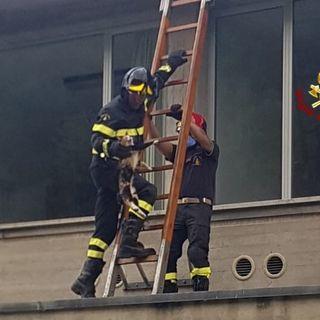 """Gatto acrobata va a """"far visita"""" ai malati in ospedale. Prelevato sul tetto dai pompieri"""