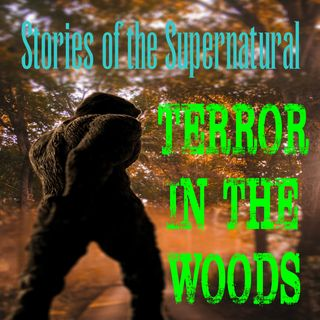 Terror in the Woods | Interview with WJ Sheehan | Podcast