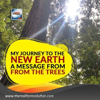 A Message From The Trees My Journey To The New Earth