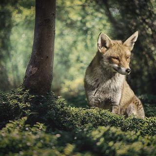 Il vecchio leone e la volpe