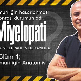 Omuriliğin hasarlanması ile oluşan durum. Miyelopati-1