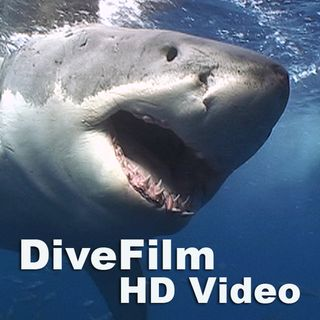 Canon 5D Mark II HD Underwater Video!
