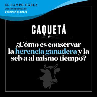 Caquetá: ¿Cómo es conservar la herencia ganadera y la selva al mismo tiempo