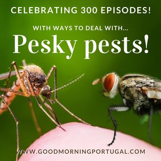 Portugal news, weather & celebrating 300 GMP episodes! (plus pesky pests)