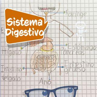 ¿Qué es y cómo funciona el sistema digestivo, del cuerpo humano? (Explicación para niños)