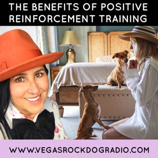 Reasons To Adopt Positive Reinforcement Training Methods