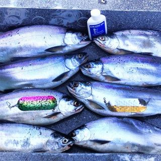 NWWC Hot Tip: Your guide to Lake Stevens kokanee with Brianna Bruce