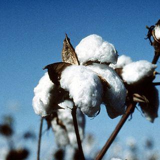 Vestiti usati cotone australiano