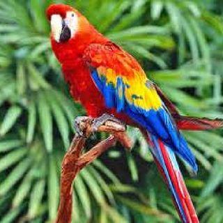 Natural Beauties Of Costa Rica