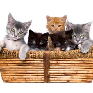 The Basket of Kittens written and read by David Higgins