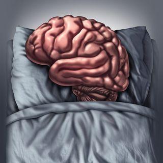 El cerebro que duerme