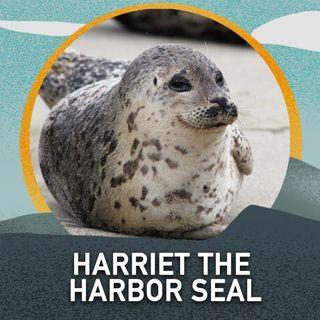 Harriet the Harbor Seal