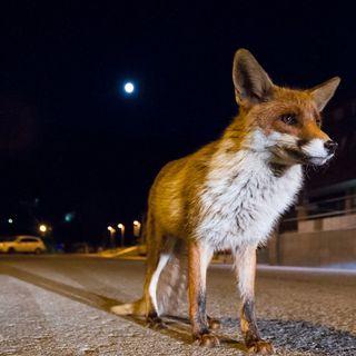 Gattung, Art und Unordnung (4/4): Was erwartet uns im Tierhimmel
