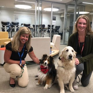 Pups Comfort Patients Through 'Brigham Buddies' Therapy Dog Program