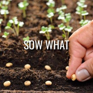 Sow What - Morning Manna #3195