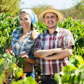 In the Vineyard