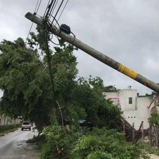 Delta derriba cientos de árboles y postes de luz