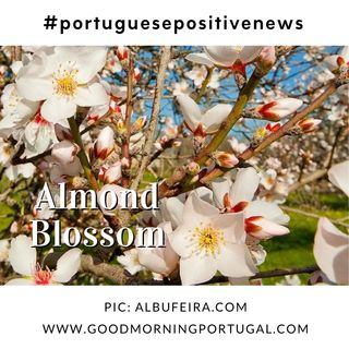 Good Morning Portugal! Portuguese Almond Blossom Time