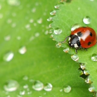 Ep17 Best Pest Prevention Strategies for Your Garden
