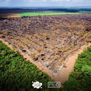 #028 - Desmatamento, um problema ambiental que não para de crescer